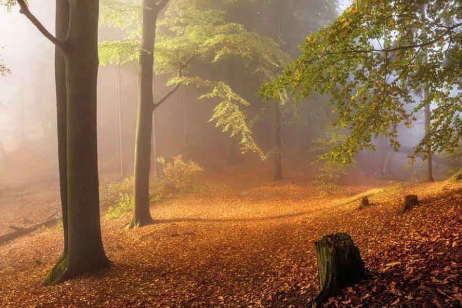 Roman Flosser, Podzimní atmosféra